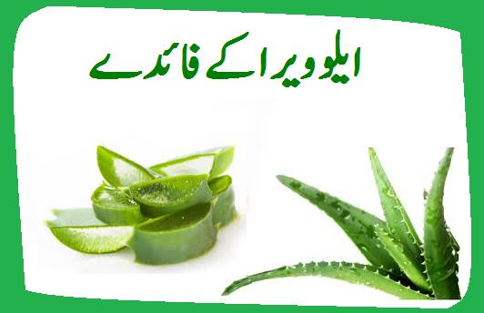 aloe vera benefits in urdu