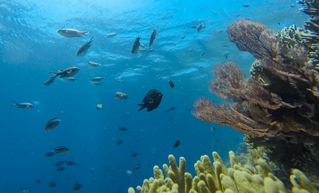 Wisata bawah laut pulau tomia, wakatobi sulawesi tenggara