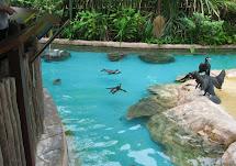 Jax Stumpes Singapore Jurong Bird Park 9 2012