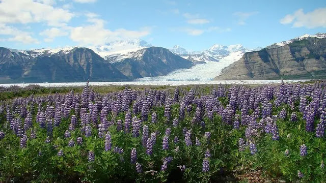 Turnagain Arm in Anchorage, Alaska