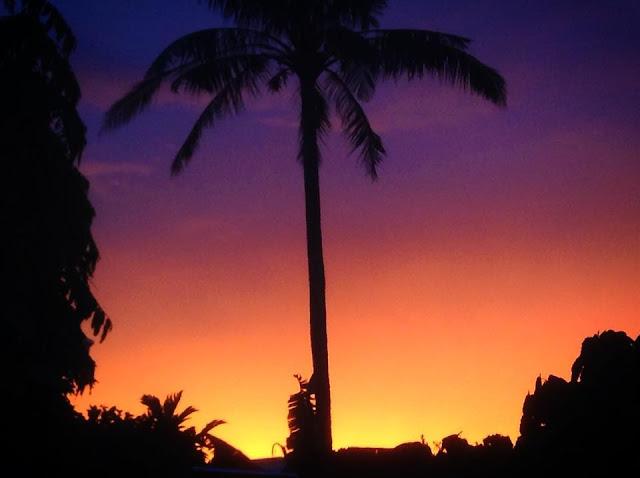 Owoc drzewa życia - kokos