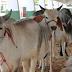 A 52ª edição da Expofeira Paraíba Agronegócios vai até o dia 22 de setembro.