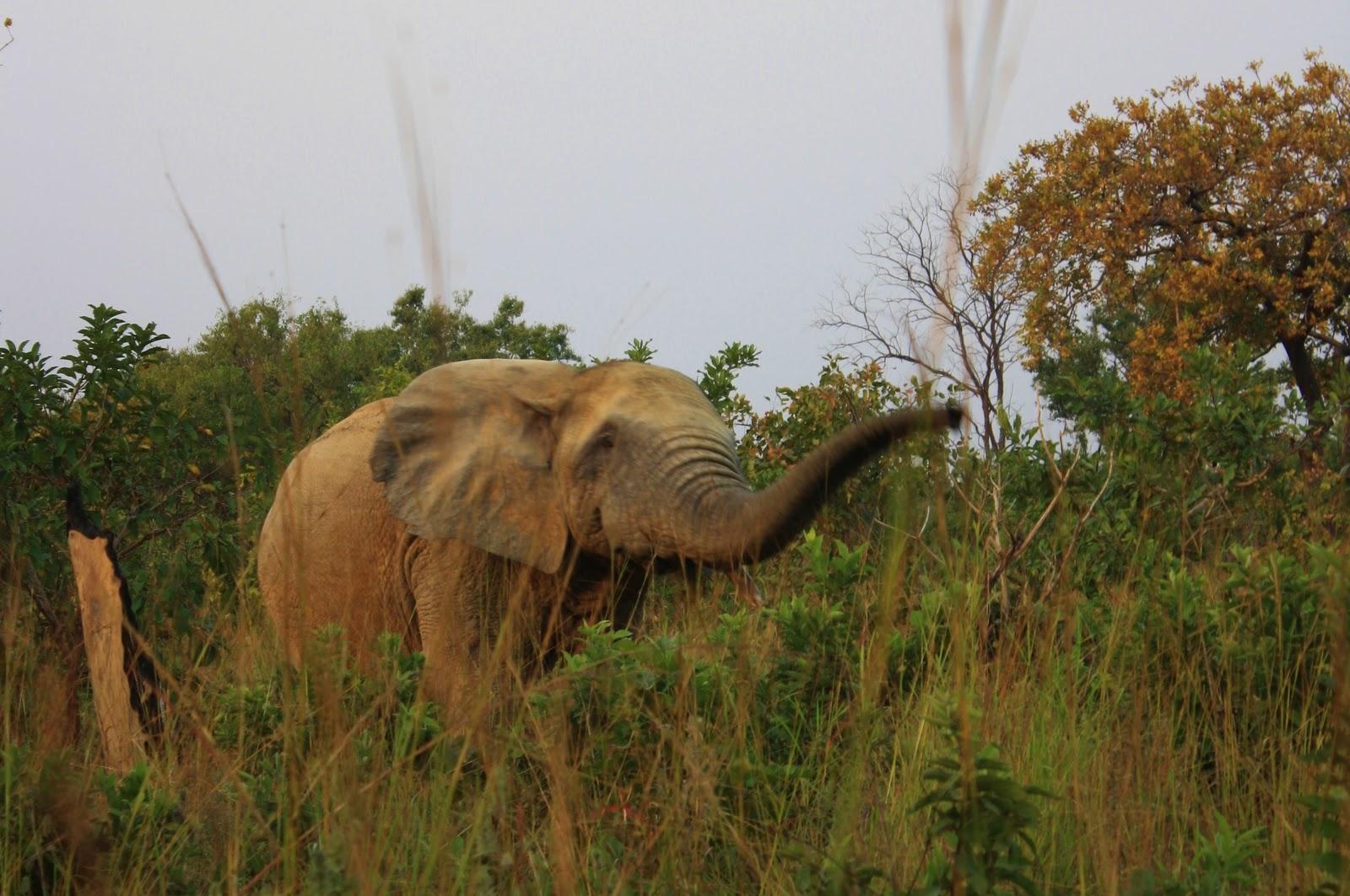 Daplane Datrain Dakar: Don't Think of an Elephant