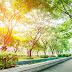 Финский город Лахти признан Зеленой Столицей Европы