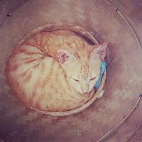 keutamaan memelihara kucing menurut agama islam