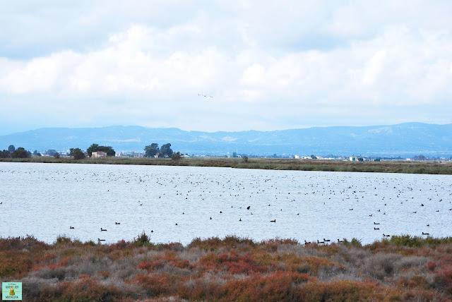 Laguna de la Encanyissada, Delta del Ebro