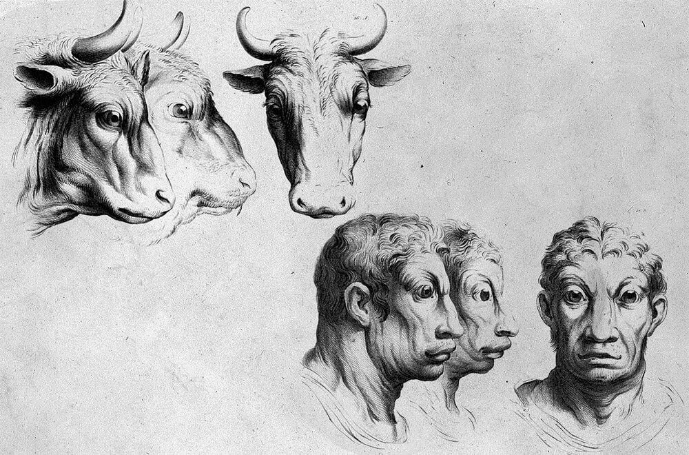 11-Bull-Animal-Transformations-Drawings-from-the-1600s-www-designstack-co