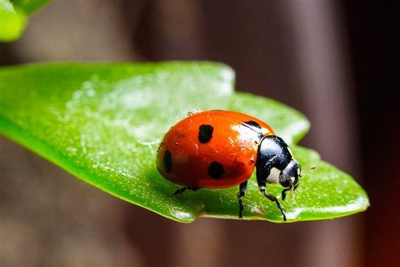 Uğur Böceği – U Hayvan İsimleri