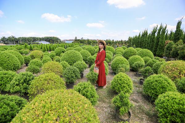 彰化田尾松竹園藝七里香波波草好有趣,還有各種松柏免費入園拍照