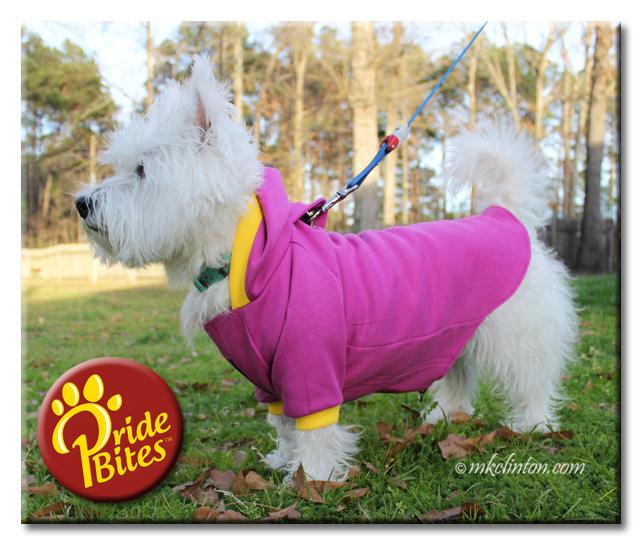 Westie wearing PrideBites hoodie