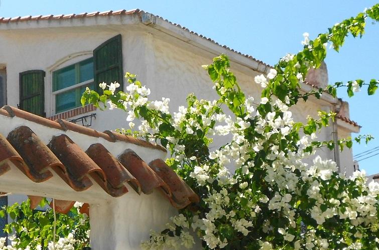 Pflanzen des Mittelmeerraums für einen mediterranen Garten
