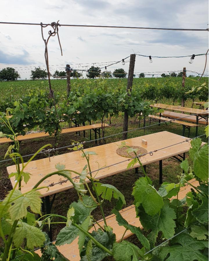 Heurigentische im Weingarten