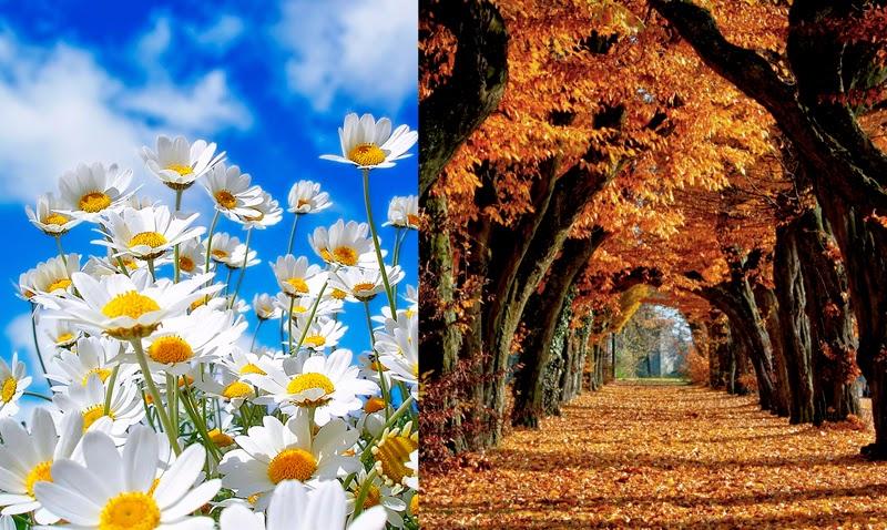 Analiza kolorystyczna - co odróżnia Wiosnę od Jesieni?