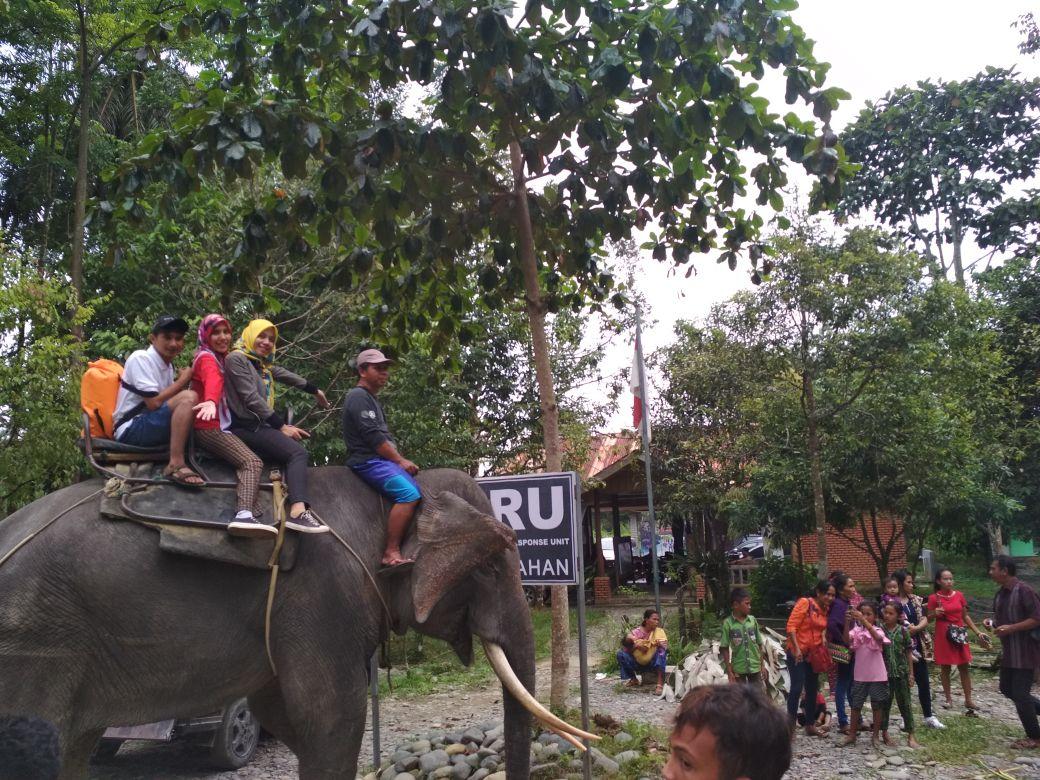 Tangkahan Destinasi Sumatera Utara