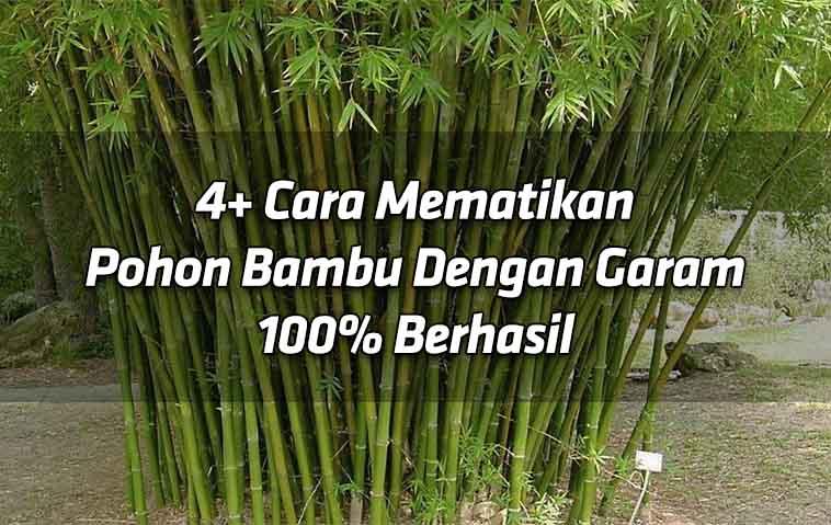 4-cara-mematikan-pohon-bambu-dengan-garam-100-berhasil