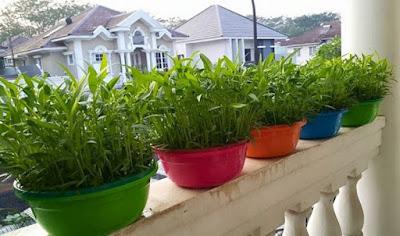 Jenis Sayuran Hidroponik yang dapat di Budidayakan