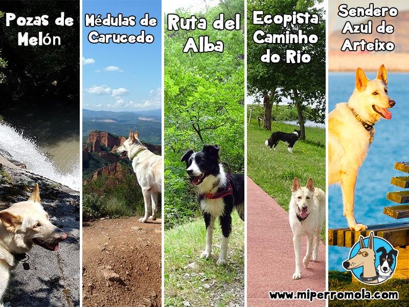 5 Rutas con Perro para disfrutar del Senderismo