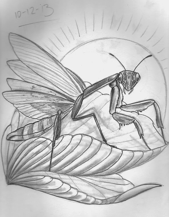 Tattoo Sketch A Day Insects December 8th 14th