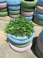 Neumáticos con perejil AEA Bosque Animado