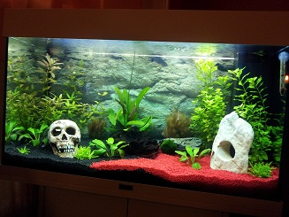 pacos kleine welt mein aquarium 125 liter. Black Bedroom Furniture Sets. Home Design Ideas