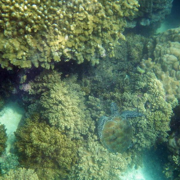 snorkeling, schnorcheln, daymaniyat, islands, inseln, fische, korallen, oman, Muscat, unterwasser, meer, turtles, schildkröten