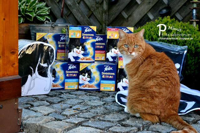 Katze Mimi mit Futter, Spielzeug und einer Kratzfigur von FELIX