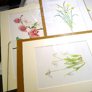botanical art, watercolour paintings, Eirennach,