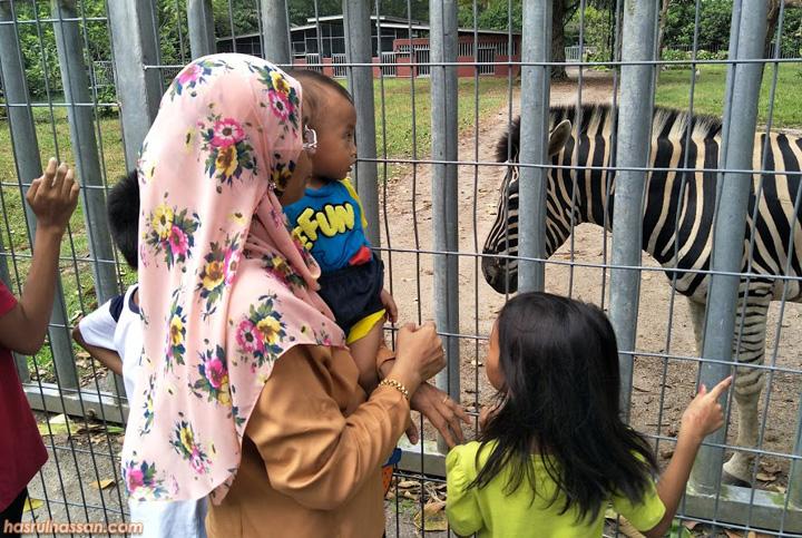 Zebra di Zoo Taiping