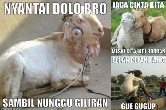 Kumpulan meme lucu hewan kurban terbaru