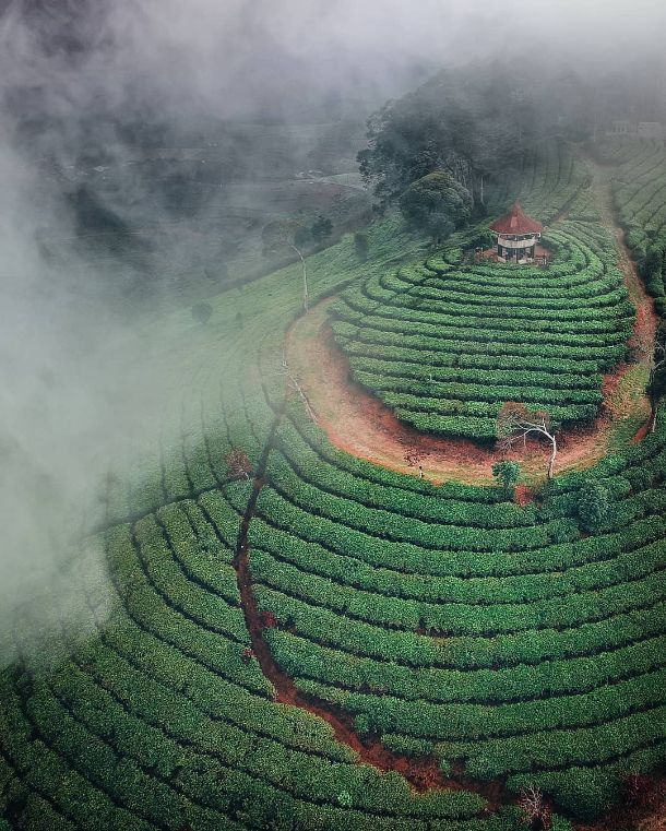 10 gunung nini perkebunan teh malabar pangalengan Photo by @travelingwithjuan