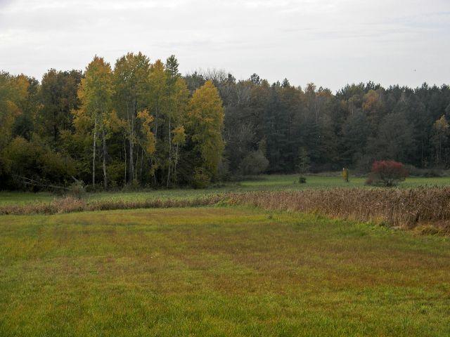 rośliny łąk, tereny podmokłe, las, przyroda