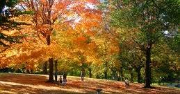 Curiosidades de las ciencias naturales por qu los for Arboles que no pierden sus hojas en otono