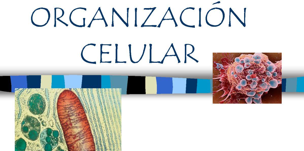 Biología celular (I): la organización celular - Biología