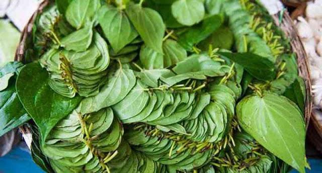 manfaat dain sirih untuk obat batuk