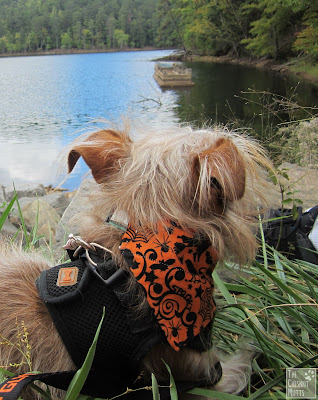 Bailey looking over into the reservoir