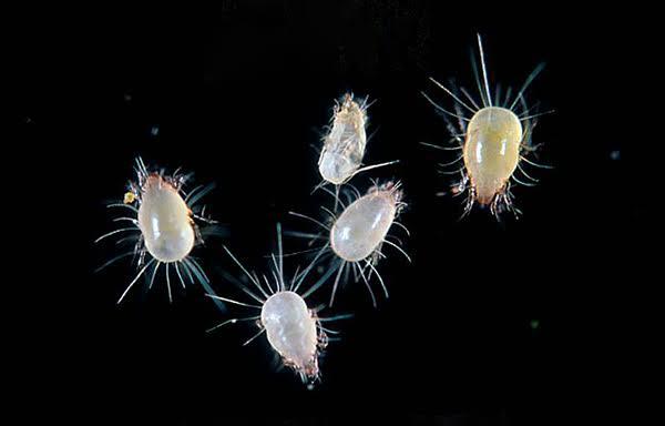 ما هي حشرة العتة