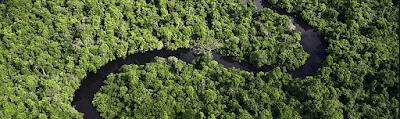 Amazonia-bosques-deforestacion