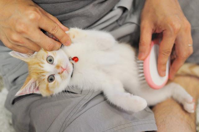 سبب تساقط شعر القطط وعلاجه