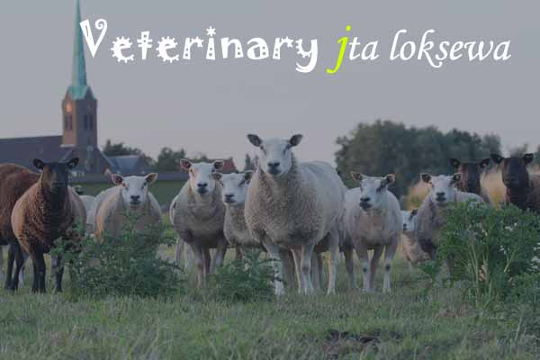 Veterinary jta loksewa 2020