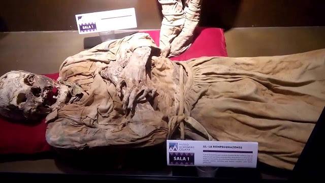 Ubicado un costado del Panteón Municipal de Celaya, desde hace cuatro años los visitantes pueden apreciar a 23 cuerpos momificados que se encuentran con estrictos cuidados de conservación para preservar la historia de varias décadas incluidas las prendas y objetos que les pertenecían y que lo hacen un sitio único para visitar.