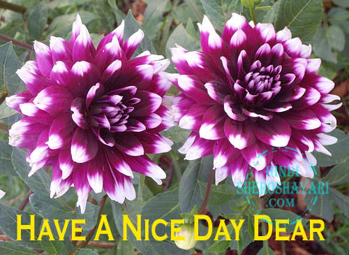 Good Morning Wishes with Dahlia Flowers