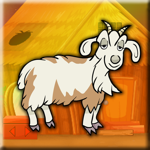 Boer Goat Escape