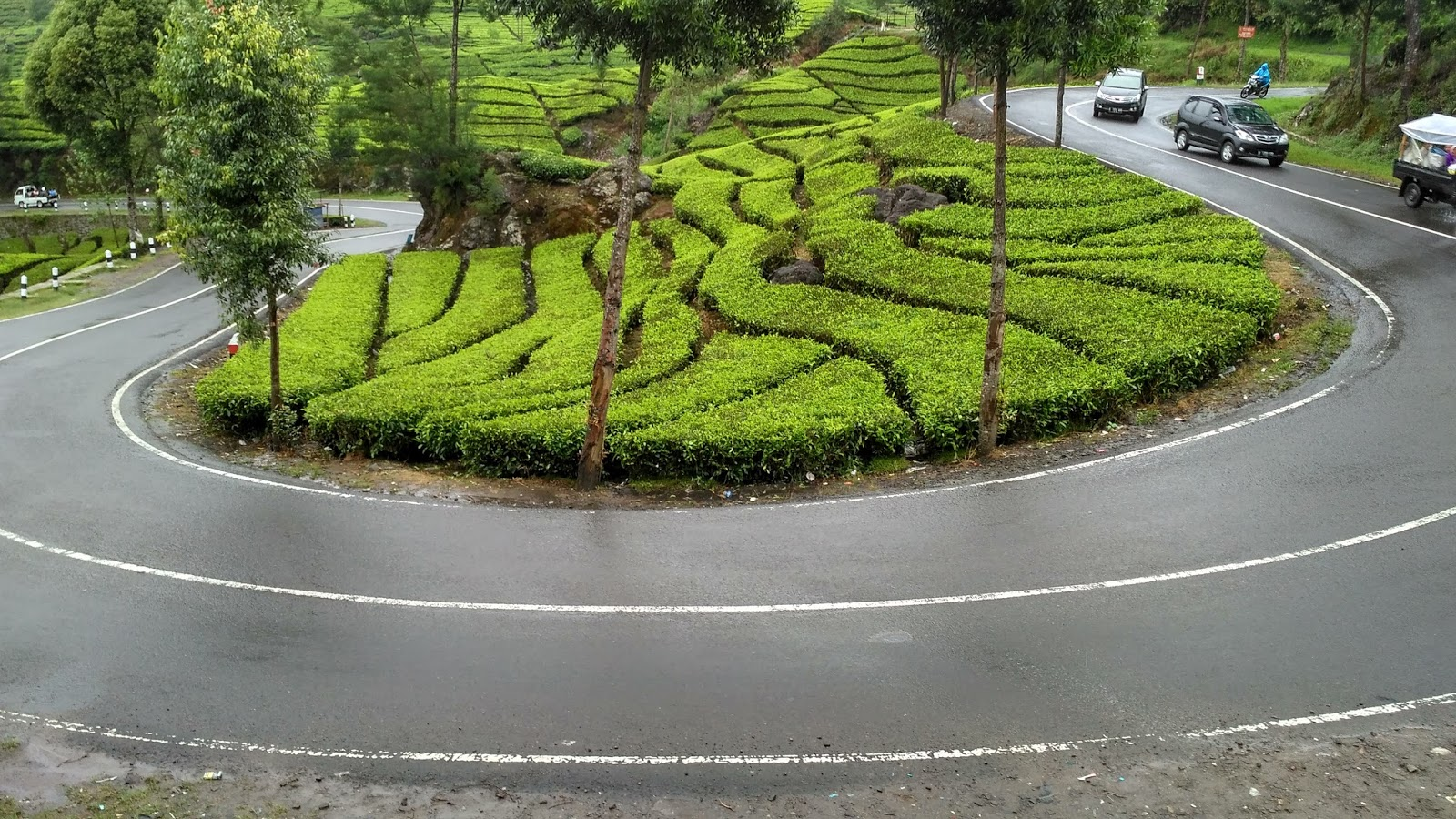 Perkebunan teh Rancabali Ciwidey