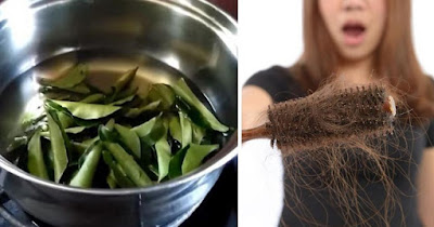 THIS CURRY LEAF OIL WILL STOP HAIR LOSS AND INCREASE HAIR GROWTH!