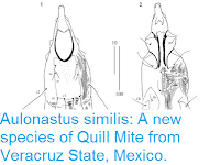 https://sciencythoughts.blogspot.com/2016/08/aulonastus-similis-new-species-of-quill.html