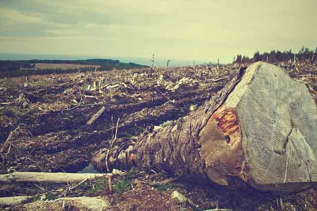 Penebangan hutan secara liar