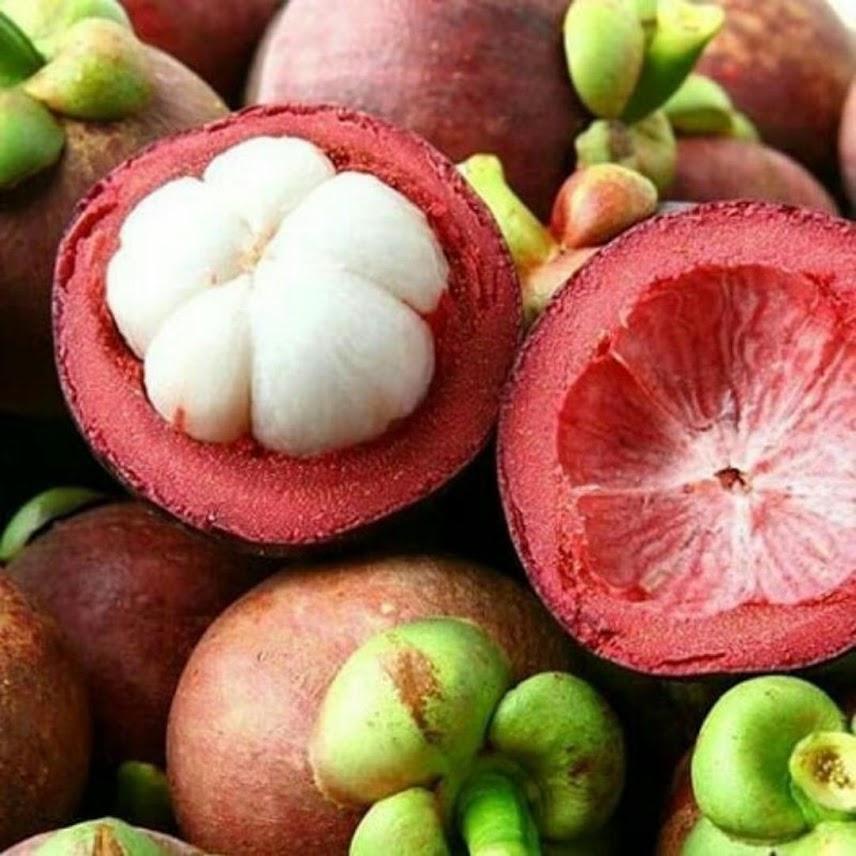 bibit tanaman manggis tanpa biji super Kalimantan Utara
