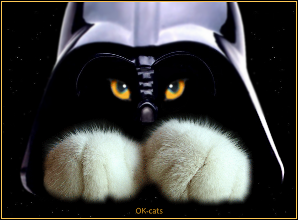 Photoshopped Cat Picture • Creepy black cat with orange eyes • Come to the dark side!