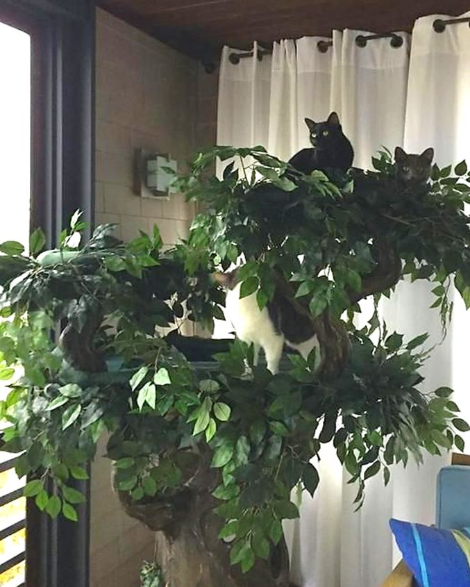 Large Cat Trees for Multiple Cats
