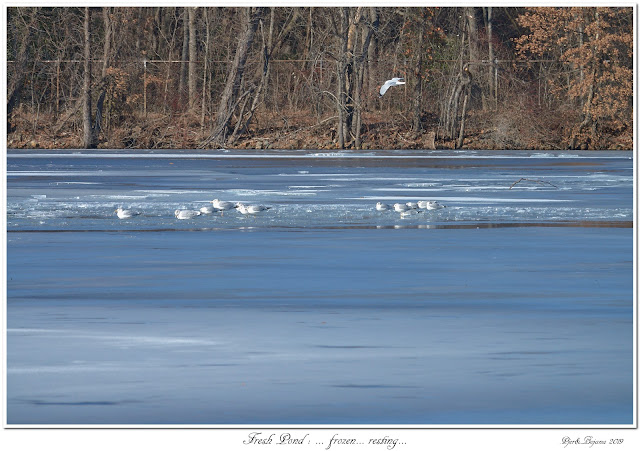 Fresh Pond: ... frozen... resting...